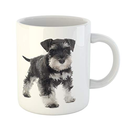 Emvency Funny Coffee Mug Black Puppy Miniature Schnauzer in Front of White Dog Pet Animal Purebred Studio 11 Oz Ceramic Coffee Mug Tea Cup Best Gift Or Souvenir ()