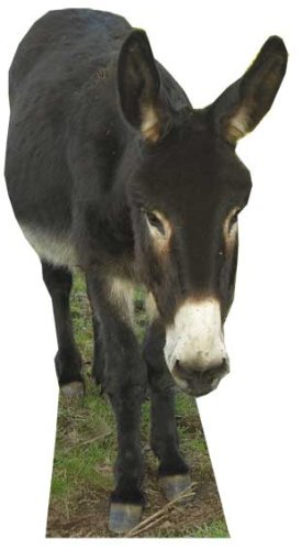 Donkey - Wildlife/Animal Lifesize Cardboard Cutout / Standee / Standup by Starstills UK - Animal Cardboard Cutouts