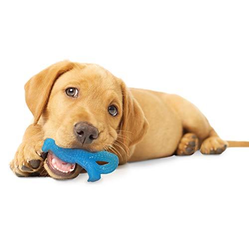 Nylabone Puppy Dental Dinosaur Chew Toy for Teething Puppies Chicken Regular, Blue (491598)