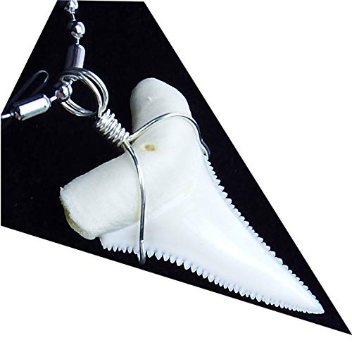 GemShark Real Shark Tooth Necklace Great White for Boy Men 1.2 inch Sterling Silver Wrapped Charm Pendant