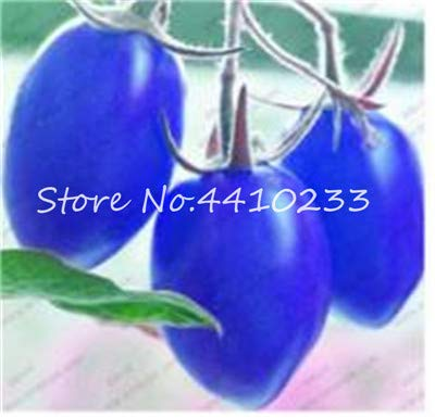 100 pcs Rainbow Dwarf Tomato Seeds Rare Tomato Organic Sweet Vegetable & Fruit Seeds Potted Plant for Home Garden Easy to Grow: a
