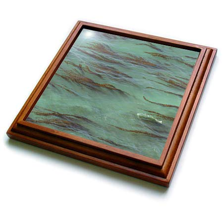 3dRose Danita Delimont - Natural Patterns - USA, California, Big Sur. Strands of ocean kelp forest. - 8x8 Trivet with 6x6 ceramic tile - 8in Strand Natural