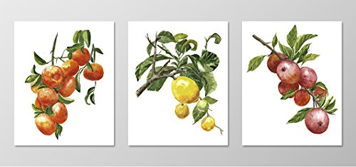 Colorful wall art #A080 - Set of 3 fruit art prints(8x10 ).Fruit art.Fruit wall art.Fruit pictures.pictures of fruit.Fruit painting.Fruit artwork.Lemon,Tangerine,Apple art prints