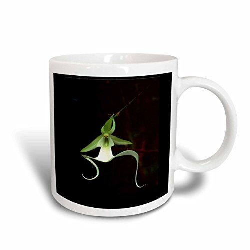 3dRose mug_53293_1 Rare Exotic Ghost Orchid Ceramic Mug, 11 oz, White (Ceramic Ghost)