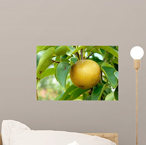 Pear Tree Mini (Olympic Asian Pear Tree Wall Mural by Wallmonkeys Peel and Stick Graphic (12 in W x 8 in H) WM150810)