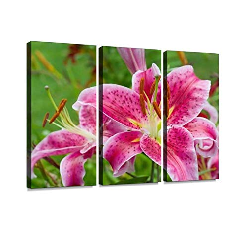 Pink Lily in The Garden, Lilium orientalis Stargazer Hybrid Print On Canvas Wall Artwork Modern Photography Home Decor Unique Pattern Stretched and Framed 3 Piece