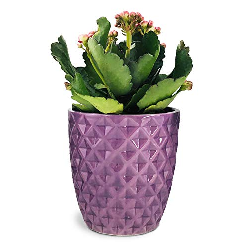 Purple Flower Pot, Orchid Pot 5 Inch Ceramic Cactus Plant Container, Aloe pots, Indoor Home Decoration Modern Planter by Forward