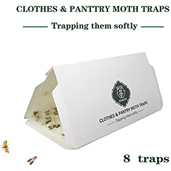flour moth amazoncom 6 indian meal moth traps pantry moth traps bird seed