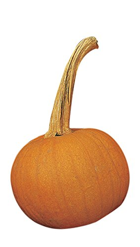 Burpee Early Sweet Sugar Pie Pumpkin Seeds 35 seeds