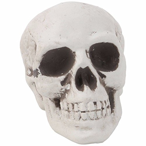Shalleen 1Pc Plastic Human Skull Decor Prop Skeleton Head Halloween Coffee Bars Ornament (Beetlejuice Little Head)