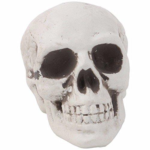 Shalleen 1Pc Plastic Human Skull Decor Prop Skeleton Head Halloween Coffee Bars Ornament
