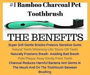 Petdentist Charcoal Toothbrush Plus Petsmile Cat Dog Toothpaste Best for Dental Teeth Cleaning Treating Bad Dog Breath Tartar Plaque Gingivitis and Whitening Teeth in Dog Dental Care - Combo 2