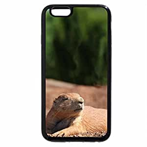 iPhone 6S / iPhone 6 Case (Black) gophers