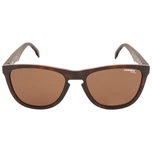 Sol Marrón Unisex 5042 Carrera de Pz Matt SP Havana N9P S 55 Adulto Bronze Gafas zWpYqgYAw