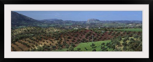 GreatBIGCanvas ''Olive Groves Andalucia Spain'' Entitled Photographic Print with Black Frame, 48'' X 15'' by greatBIGcanvas