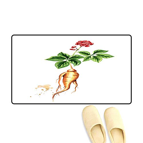 Interior Doormat Organic Fresh Ginseng Plant wi Root Green Leaf an re Flower Watercolor han Drawn Illustration Isolate on White backgroun ()