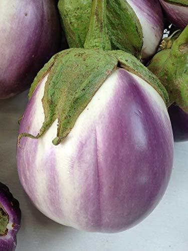 Rosa Bianica Eggplant Seeds, 100+ Premium Heirloom Seeds, Fantastic Addition to Home Garden!, (Isla's Garden Seeds), Non GMO Organic, 90% Germination Rates, Highest Quality, 100% Pure (Best Home Garden Vegetables)