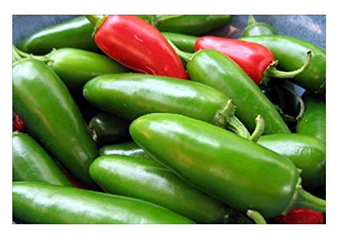 David's Garden Seeds Pepper Jalapeno Early SL5866 (Red) 50 Non-GMO, Organic Seeds