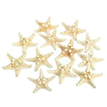 SODIAL(R) 12 x White Knobby Starfish 5cm -7cm Sea Star Shell Beach Wedding Display Craft Decor