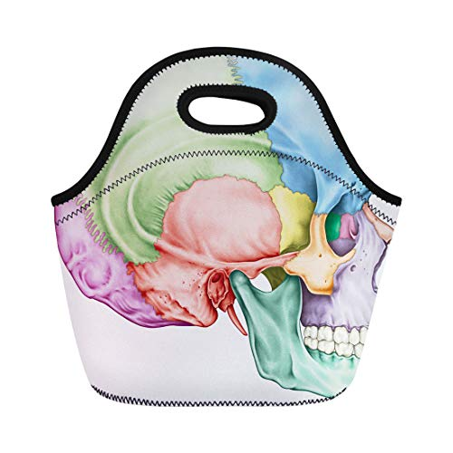 - Semtomn Lunch Tote Bag the Bones of Cranium Head Skull Individual and Their Reusable Neoprene Insulated Thermal Outdoor Picnic Lunchbox for Men Women