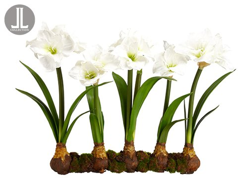 22-Amaryllis-With-Bulb-on-Soil-and-Moss-White-pack-of-2