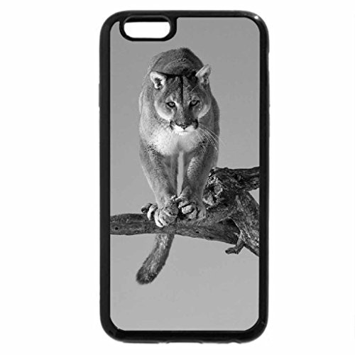iPhone 6S Case, iPhone 6 Case (Black & White) - beautiful big cat
