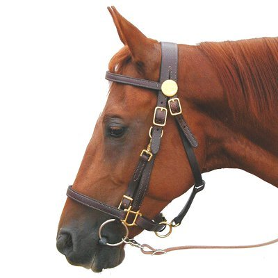 Trail Bridle Combo Halter by Shenandoah Full Brown Full ()