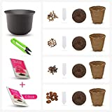 Grow Your own Bonsai kit – Easily Grow 4 Types of