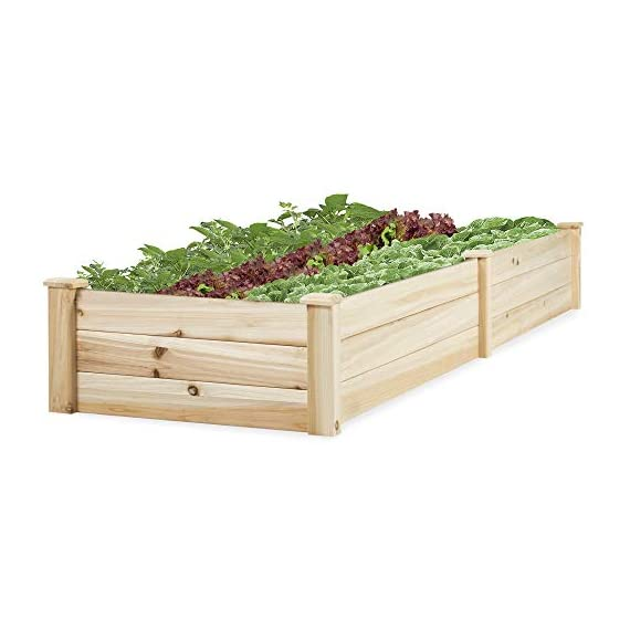 Best Choice Products Vegetable Raised Garden Bed Patio Backyard Grow Flowers Elevated Planter 1 8' x 2' garden bed is perfect for growing your plants and vegetables Comes with a divider in the middle so you can separate it into 2 garden bed boxes Boards are made of 0.5 inch thick solid wood that is built to last through the seasons