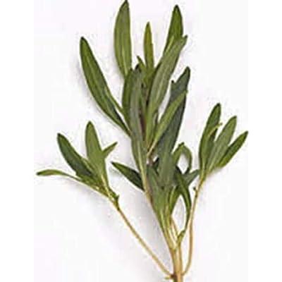 Lumos80 Savory, Summer, Heirloom, Organic, 100+ Seeds, Non GMO, HERB, Spice, Garden Seed : Garden & Outdoor