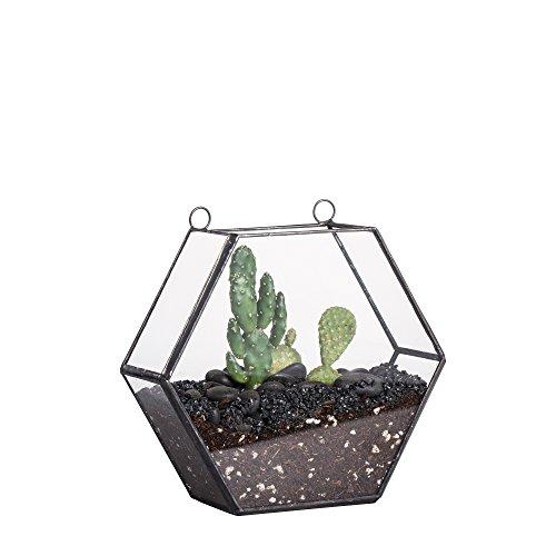 Modern Handmade Wall Mount Hexagon Geometric Glass Hanging Terrarium Tabletop Succulent Planter Moss Fern Flower Pot Air Plant Holder Display Container Box 5.5x1.7x6.1 (Hexagon Hanging)