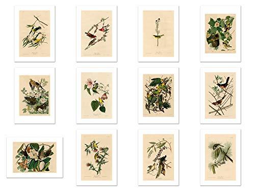 Wish Pub - Handmade Assorted Bird Painting Postcards - Set of 12 Unique Design