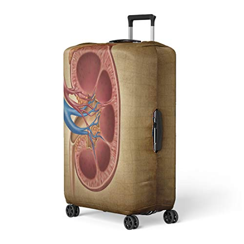 Semtomn Luggage Cover Human Kidney on As Medical Diagram Cross Section Travel Suitcase Cover Protector Baggage Case Fits 18-22 Inch
