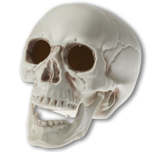 Prextex 6.5 inch Realistic Looking Skeleton Skull for Best Halloween Decoration -
