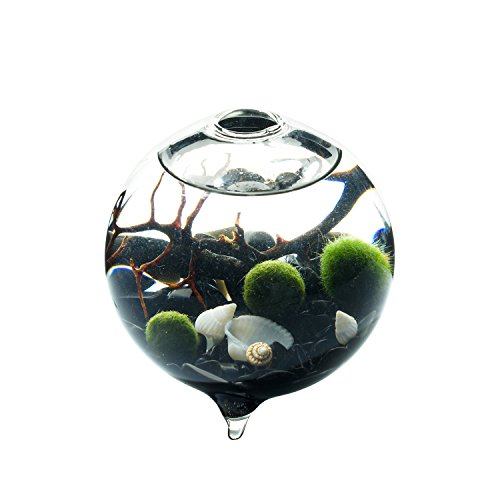 Marimo Terrarium Kit - 9CM Footed Globe Terrarium 3 Living Moss Balls Natural Obsidian Gravels, Sea Fan, Office Desk Decoration Unique Gift