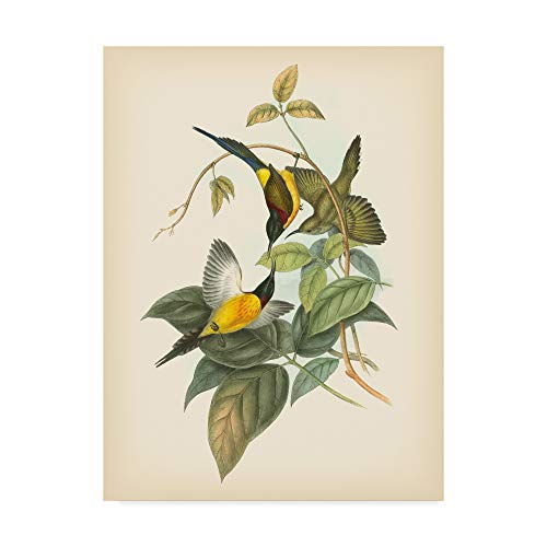 (Trademark Fine Art Birds of The Tropics Iv by John Gould, 18x24-Inch)