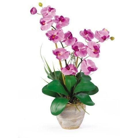 Double Phalaenopsis Orchid Arrangement (Mauve) (25''H x 15.5''W x 12''D)