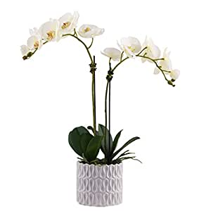 Little Green House Phalaenopsis Orchid Artificial Plants