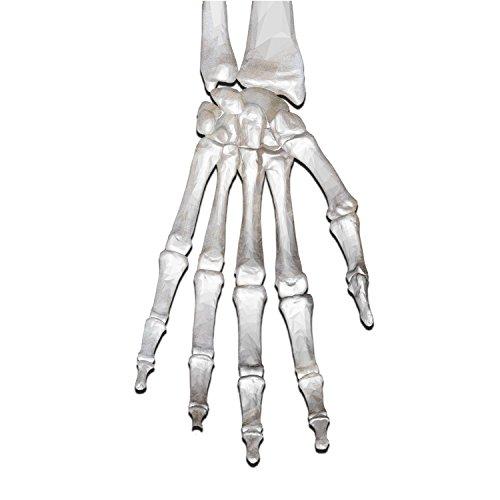 Grenade Skull Skeleton Glove Hand Window Laptop Car Sticker 6
