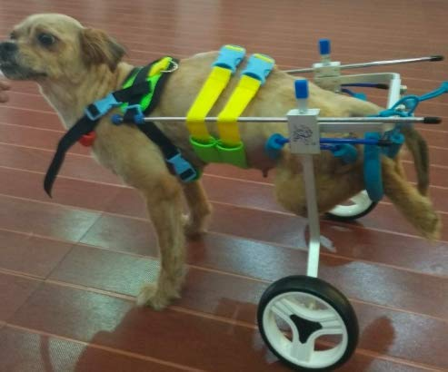 Adjustable Dog Wheelchair, Hip Height: 8'-26', Weight 0 to 100 lbs, hind legs Rehabilitation (3. Hip Height: 14'-17', Weight: 20-40Lbs)