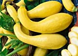 HOT!! - 50 Yellow CROOKNECK Squash Summer Cucurbita Pepo Vegetable Seeds