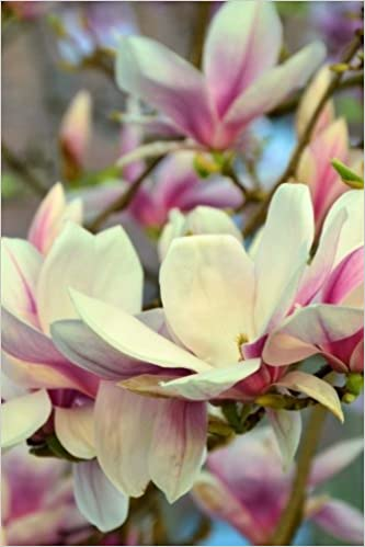 Pink And White Magnolia Tree Flower Bloom Journal Take Notes Write