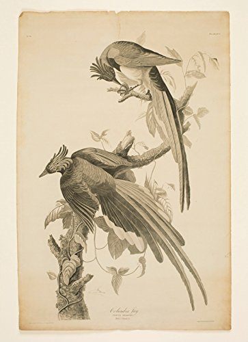 Berkin Arts John James Audubon Giclee Canvas Print Paintings Poster Reproduction (Engraving) ()