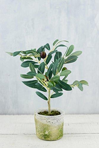 Delightful Brooch (Mini Olive Tree 12in)