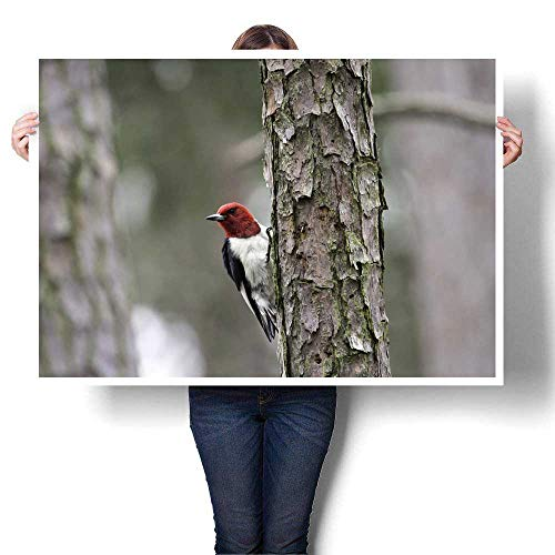 Living Room Home Office Decorations Red-Headed Woodpecker Decorative Fine Art Canvas Print Poster K 24