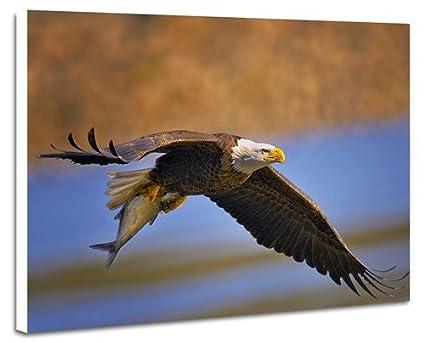 Amazoncom Bald Eagle Catching Fish Prints Artwork On Wood Board