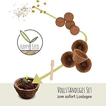 Hof Bonsai Düngerbox Outdoor 100 Stück Sukkulente Korb PP-Harz Pflanzen Moos