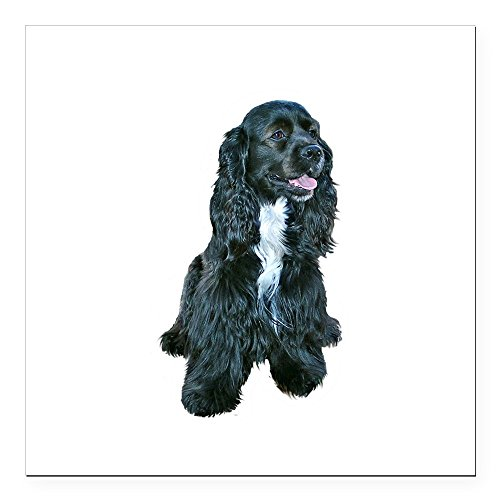 CafePress - Cocker (black- white bib) Square Car Magnet 3