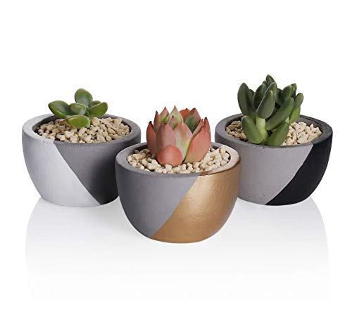Greenaholics Succulent Plant Pots - 2.95 Inch Small Round Planter for Succulents, Cactus and Small Plant, with Drainage Hole, Set of 3, Black, White, Gold