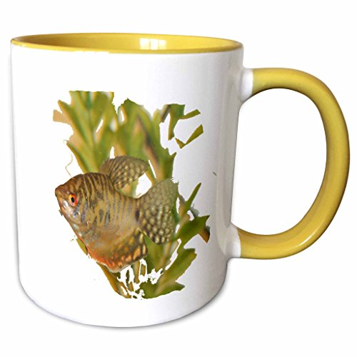 3dRose Susans Zoo Crew Animals Aquatic - Gold Gourami Freshwater Fish With Green - 15oz Two-Tone Yellow Mug (mug_156243_13)